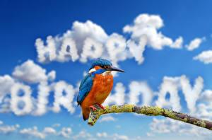 Обои Обыкновенный зимородок Птица День рождения Ветки Облачно Слово - Надпись Английская животное