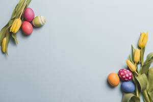 Картинки Пасха Тюльпаны Серый фон Желтая Яйцо Дизайн Шаблон поздравительной открытки Цветы Еда