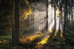 Обои Германия Леса Бавария Дерева Лучи света Природа