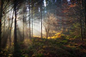 Картинки Германия Леса Бавария Деревья Лучи света Природа