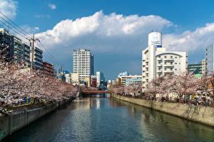 Картинки Япония Здания Весна Цветущие деревья Мосты Реки Yokohama, Ooka River Города