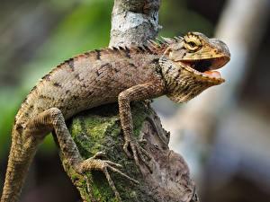 Фотографии Рептилии Боке На ветке Лап Игуана