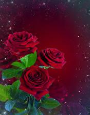 Картинка Розы Букеты Листья Шаблон поздравительной открытки Красный фон