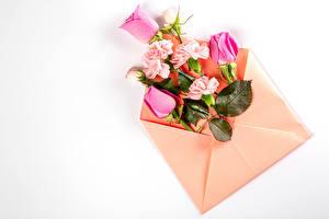 Картинка Роза Гвоздики Белый фон Конверт Шаблон поздравительной открытки Цветы