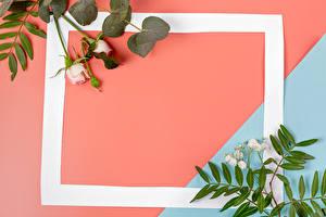 Фотографии Розы Шаблон поздравительной открытки Ветки Бутон