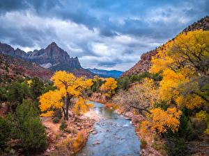 Фотография Штаты Осень Горы Реки Парк Зайон национальнай парк Дерево