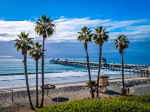 Обои для рабочего стола США Побережье Пристань Океан Калифорния Пляж Пальмы San Clemente Beach Природа