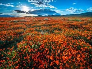 Фотография США Поля Маки Калифорния Солнце Облачно Природа Цветы