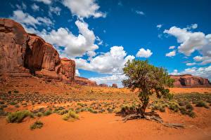 Фотографии США Скале Облака Деревья Monument Valley, Utah