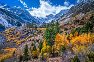 Картинка США Горы Осенние Калифорния Дерево Lundy Canyon Природа