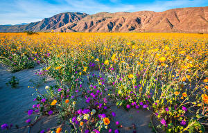 Фотографии Америка Гора Парки Калифорнии Anza-Borrego Desert State Park