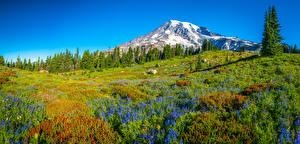 Картинка США Горы Парк Панорамная Пейзаж Дерева Вашингтон Mount Rainier National Park