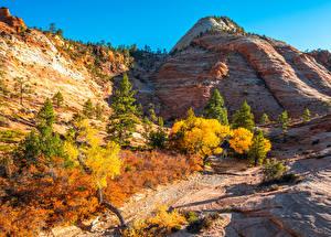 Фотография Америка Парк Осенние Горы Зайон национальнай парк Утес Utah Природа
