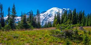 Фото Штаты Парки Гора Панорамная Пейзаж Деревья Mount Rainier National Park