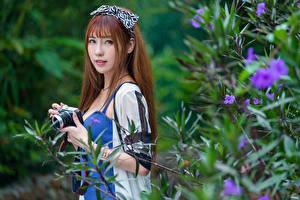 Фотография Азиаты Шатенки Ветка Взгляд Фотоаппарат Боке девушка