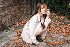 Фотографии Азиатки Сидит Листья Пиджак Смотрит Шатенка девушка