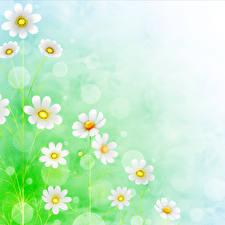 Картинки Маргаритка Рисованные Бумага цветок