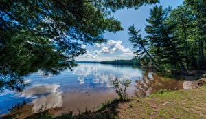 Обои Канада Озеро Деревья Облака Отражается Bark Lake Природа