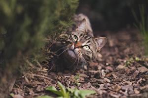 Фото Кошка Размытый фон Смотрит Усы Вибриссы животное