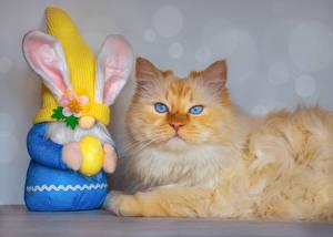Фотография Пасха Коты Кролики Смотрит Яйцо Животные