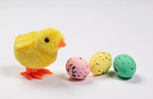 Фотографии Пасха Цыплята Серый фон Трое 3 Яйца Еда Животные
