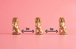 Обои для рабочего стола Пасха Кролики Коронавирус Шоколад Цветной фон Трое 3 Цветы