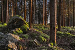 Картинка Лес Камни Деревьев Мхом Ветки Ствол дерева