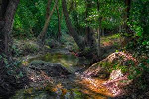 Картинки Лес Камень Дерево Ручей