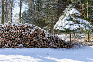 Фотография Леса Зима Ель Бревно Снега