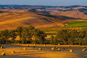 Фотографии Италия Тоскана Пейзаж Осенние Поля Холмов Дерева Природа