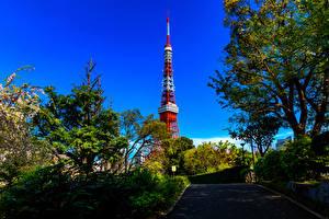 Фотография Япония Токио Башни Деревьев Shiba Park Города
