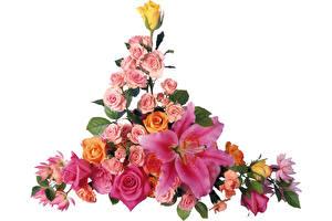 Обои для рабочего стола Роза Лилии Букет Белый фон Цветы