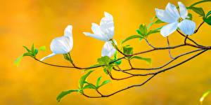 Фотографии Весна Цветущие деревья Ветки Природа