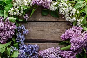 Фото Весна Сирень Шаблон поздравительной открытки цветок