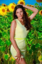 Картинки Подсолнечник Платье Руки Взгляд Rosella RU 98 девушка