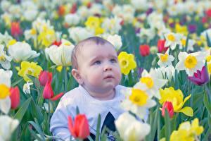 Обои Тюльпан Мальчишка Смотрит Размытый фон Грусть