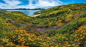 Обои США Горы Пейзаж Калифорнии wildflowers Природа