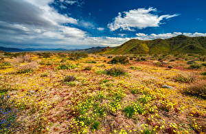 Фотография США Парк Весенние Гора Калифорния Облака Joshua Tree National Park Природа