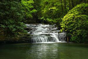 Обои Америка Парки Водопады Ветки Blackwater Falls State Park Virginia Природа