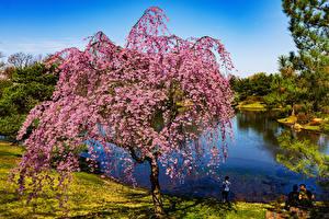 Фото США Весенние Цветущие деревья Река Missouri Природа