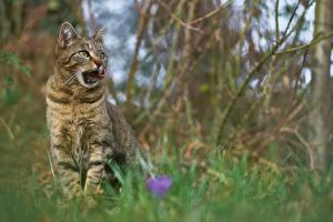 Фото Коты Боке Сидя Взгляд Животные