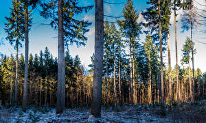 Обои для рабочего стола Дания Лес Снег Ель Ствол дерева Skodsborg Природа