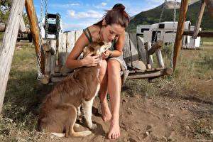 Фотографии Elena Generi Собаки Качелях Сидя девушка Животные