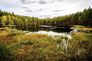 Обои Финляндия Хельсинки Парки Леса Осень Озеро Траве Sipoonkorpi National Park