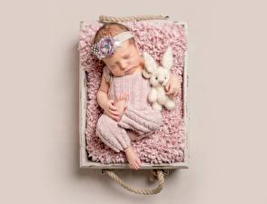 Фото Зайцы Цветной фон Грудной ребёнок Спит