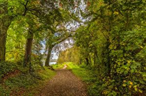Обои Ирландия Леса Деревья Тропа Boyne Valley Природа картинки