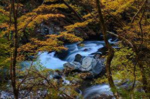 Фотография Япония Леса Реки Камень Деревьев Природа