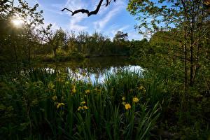 Фото Голландия Речка Ирисы Лучи света Graveland Природа