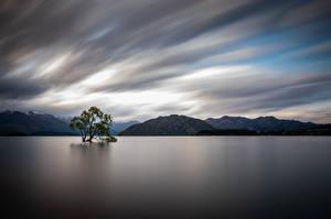 Обои Новая Зеландия Озеро Гора Дерево Lake Wanaka Природа