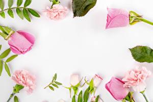 Обои Розы Гвоздики Белый фон Шаблон поздравительной открытки Розовый Цветы картинки